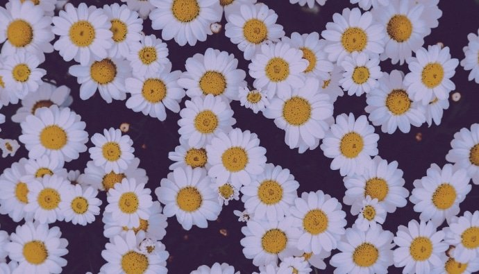 🌼 Floral Pattern Trends in 2020: PNG, Vector, Vintage, Wallpapers