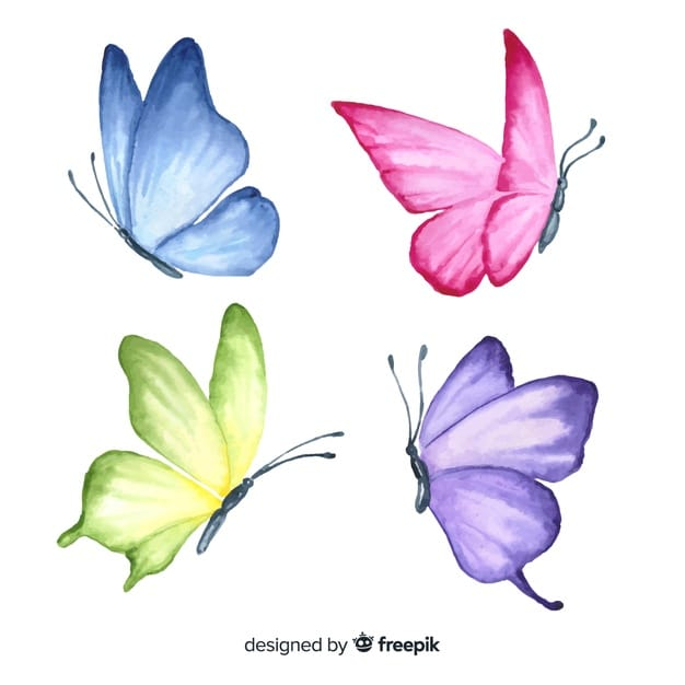 Hand Drawn Butterfly Set Vector