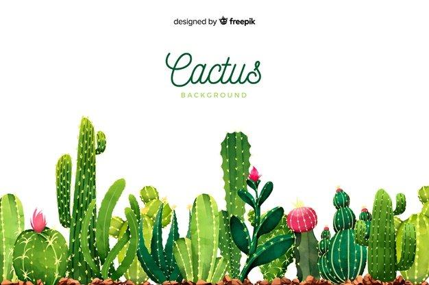 Watercolor Cactus Background. Cactus clipart.