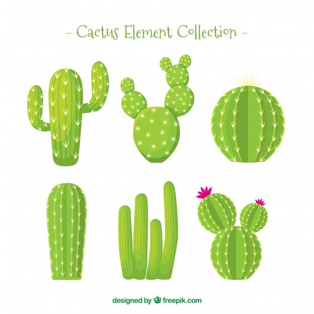 Cactus Element Collection. Cactus clipart.