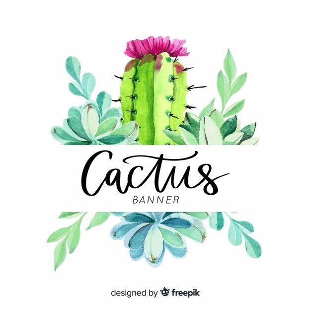 Cactus Banner.