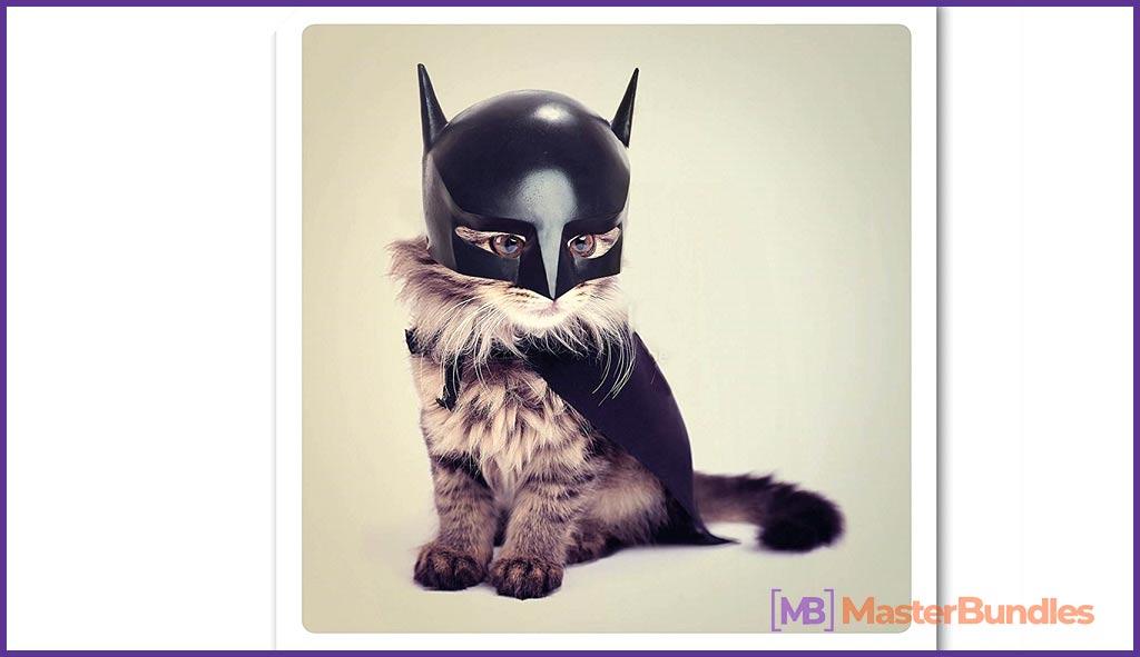 Steel Bat Cat Greetings Card