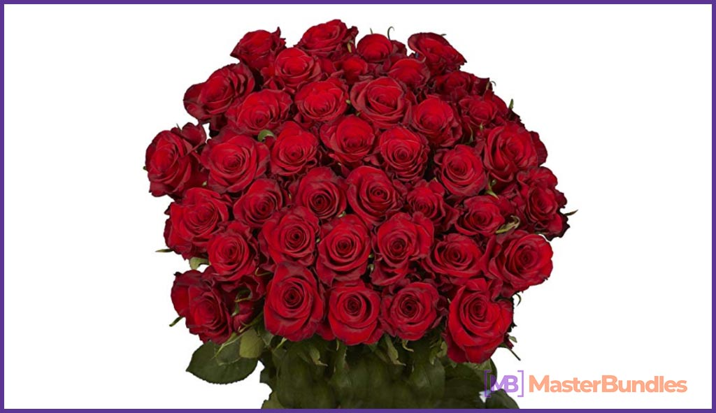 GlobalRose 50 Red Roses. Valentine's Day Gifts for Photographers