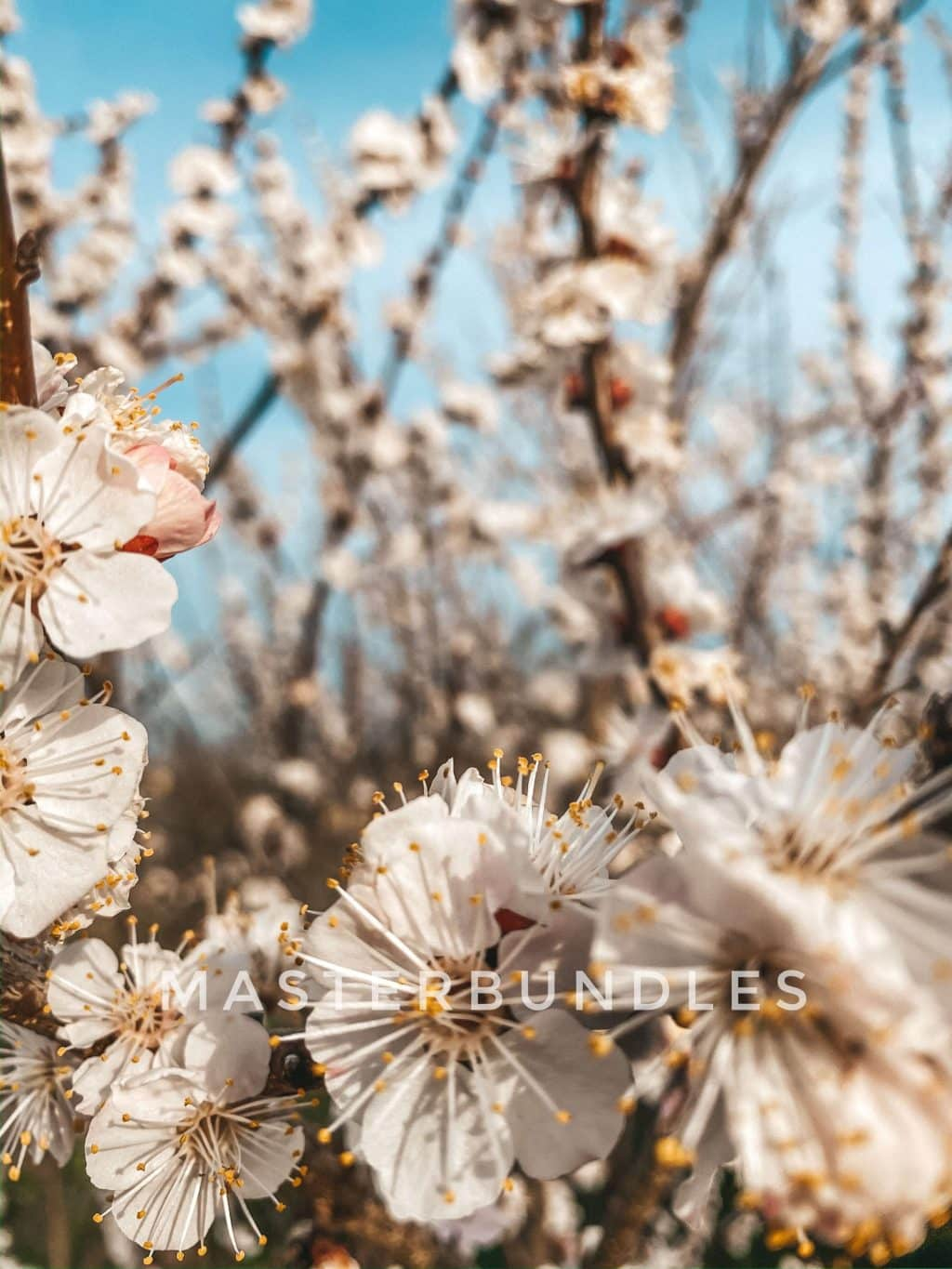 Free Spring Wallpaper Collection: Spring Flowers Wallpaper for iPhone - spring wallpaper11