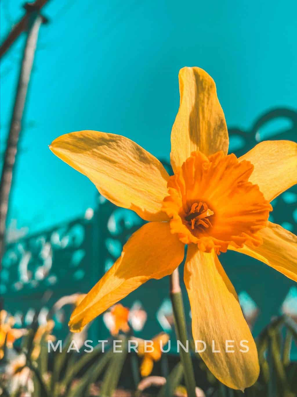 Free Spring Wallpaper Collection: Spring Flowers Wallpaper for iPhone - spring wallpaper9