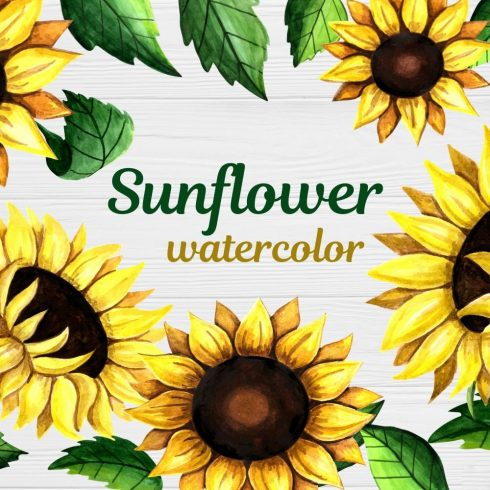 13 PNG Sunflower Watercolor 2020🌻 - 3 490x490