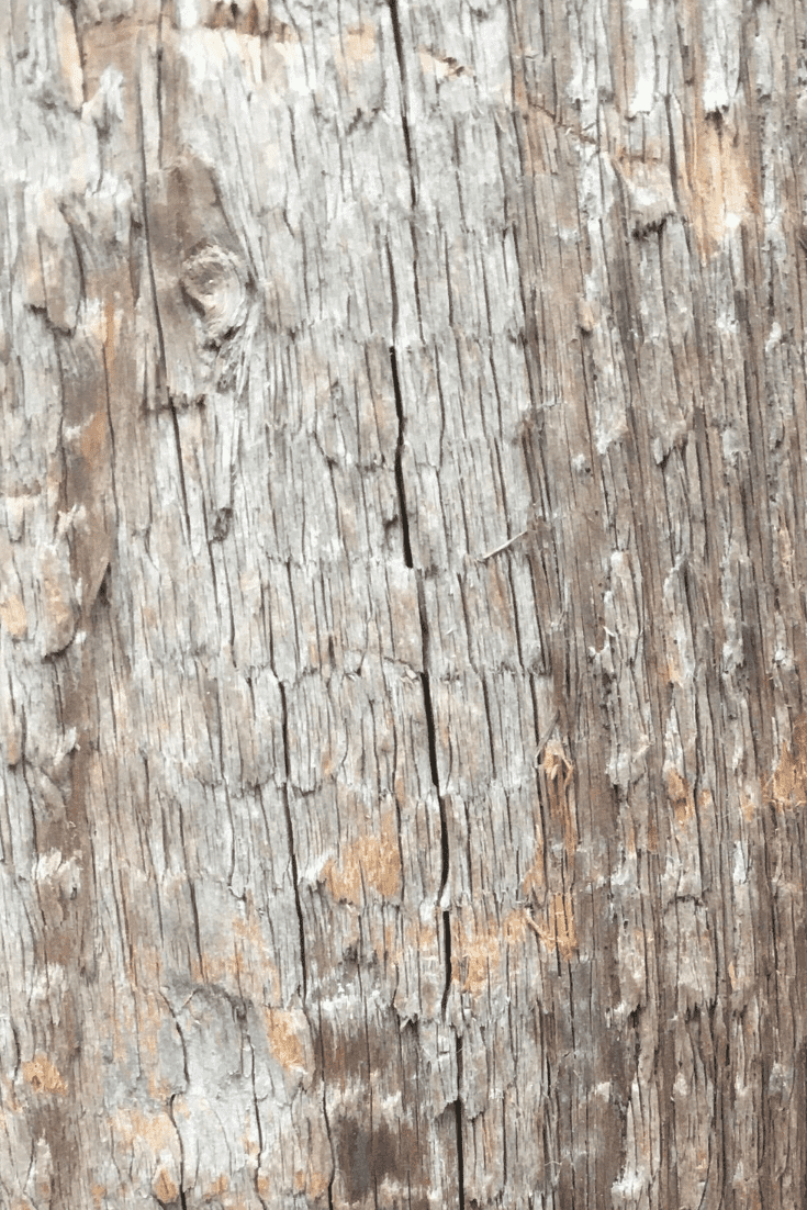 200+ Best Wood Texture Images in 2020: Free and Premium Wood Background Pictures - free wood texture images masterbundles 05
