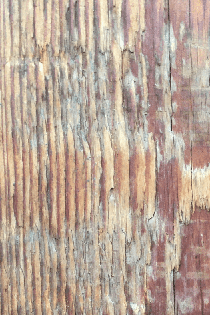 200+ Best Wood Texture Images in 2020: Free and Premium Wood Background Pictures - free wood texture images masterbundles 06