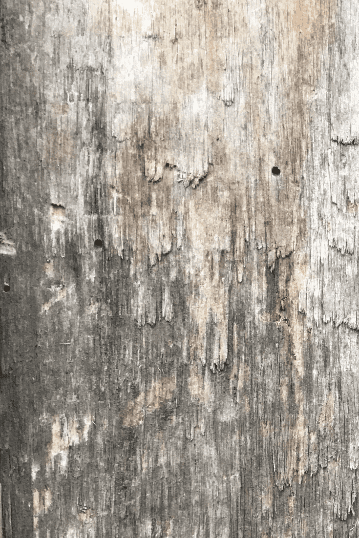 200+ Best Wood Texture Images in 2020: Free and Premium Wood Background Pictures - free wood texture images masterbundles 07