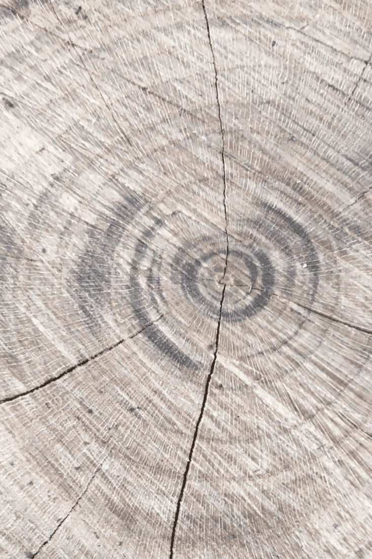 200+ Best Wood Texture Images in 2020: Free and Premium Wood Background Pictures - free wood texture images masterbundles 09