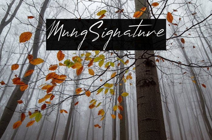 15+ Best Signature Fonts in 2020: Astounding Typography for Your Projects - signature fonts22