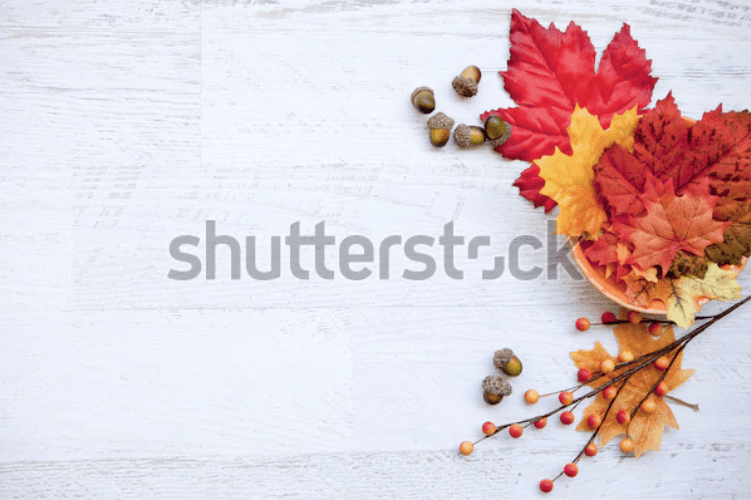 Best Thanksgiving Background 2020. 100+ Awesome Thanksgiving Background Images and Patterns - b 33