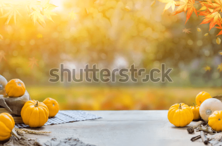 Best Thanksgiving Background 2020. 100+ Awesome Thanksgiving Background Images and Patterns - b 35