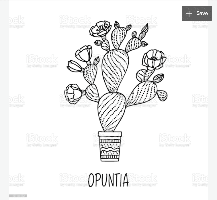 240+ Cactus Clipart 2021: Free and Premium Collections - cactus clipart 16