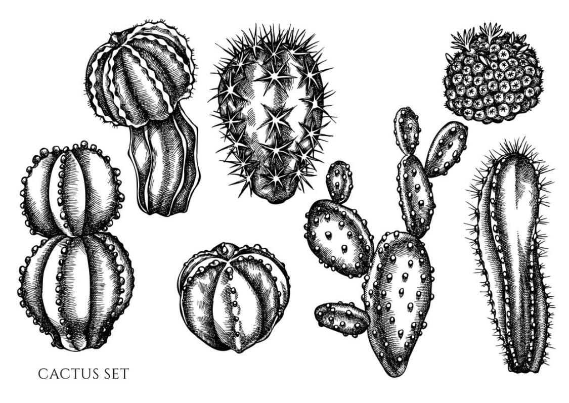 240+ Cactus Clipart 2021: Free and Premium Collections - cactus clipart 18