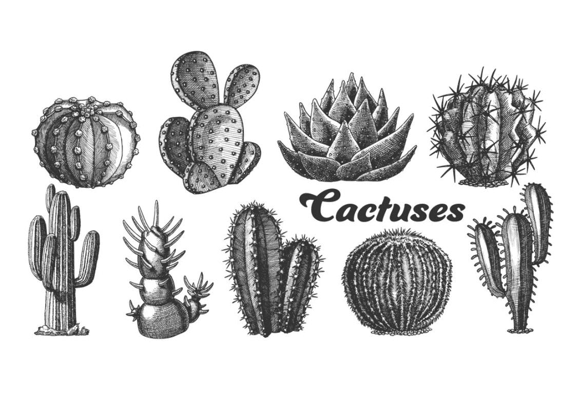 240+ Cactus Clipart 2021: Free and Premium Collections - cactus clipart 20