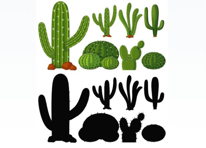 240+ Cactus Clipart 2021: Free and Premium Collections - cactus clipart 21