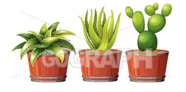 240+ Cactus Clipart 2021: Free and Premium Collections - cactus clipart 30