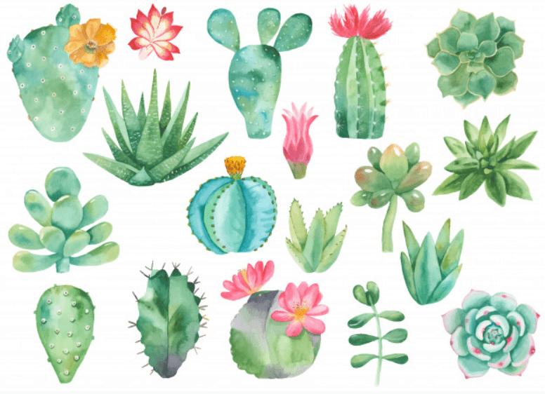 240+ Cactus Clipart 2021: Free and Premium Collections - cactus clipart 6