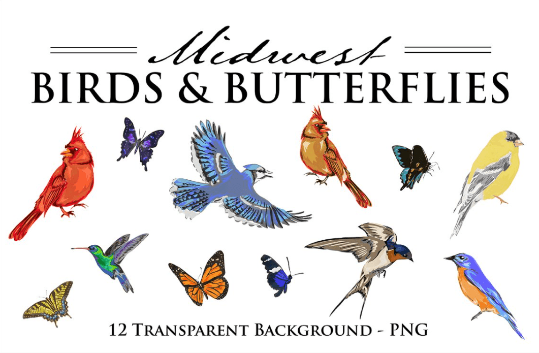 Best Butterfly Clipart 2021: What and Where to Search for? - clipart 2