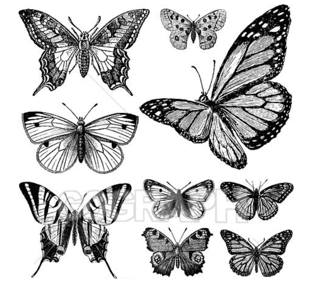 Best Butterfly Clipart 2021: What and Where to Search for? - clipart 23
