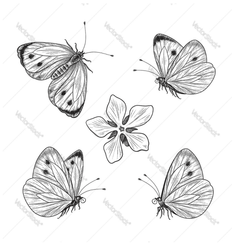 Best Butterfly Clipart 2021: What and Where to Search for? - clipart 41