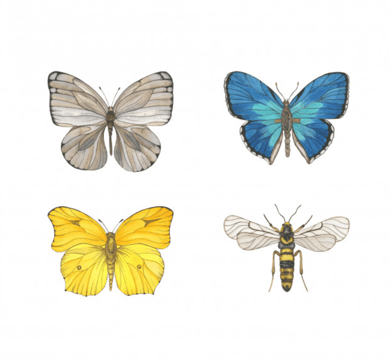Best Butterfly Clipart 2021: What and Where to Search for? - clipart 9