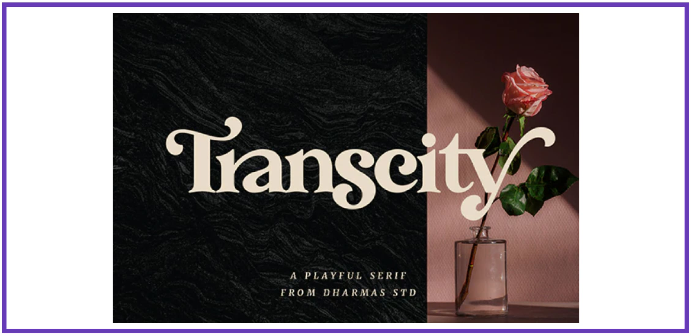 Transcity - A Playful Serif. Tropical Font.