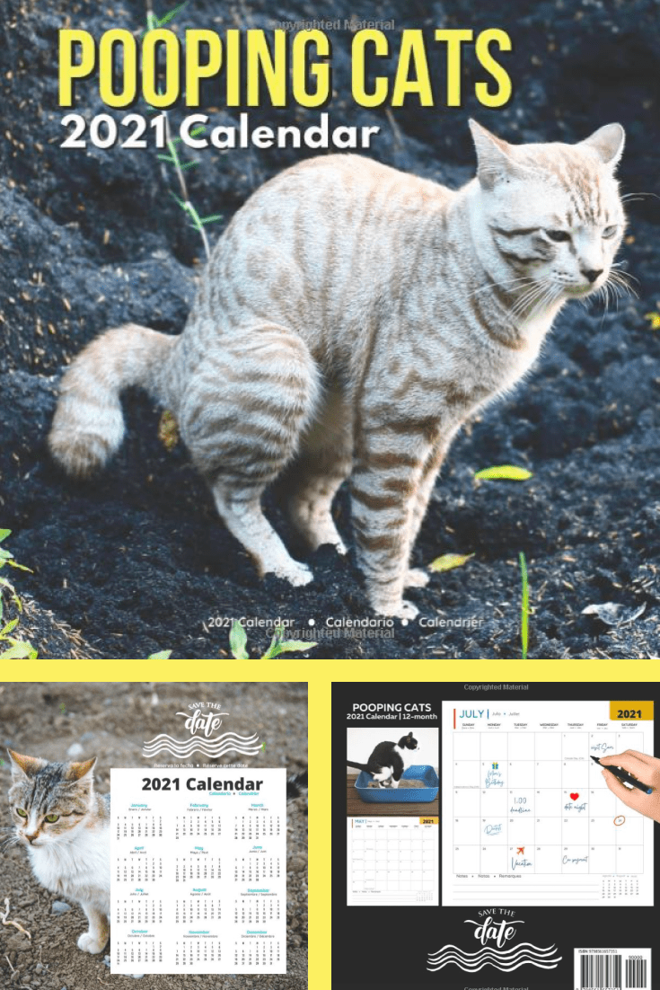 TThis is an extraordinary version of the calendar. It is suitable for people who have a good sense of humor, because not everyone will hang a calendar with a pooping cat on the wall.