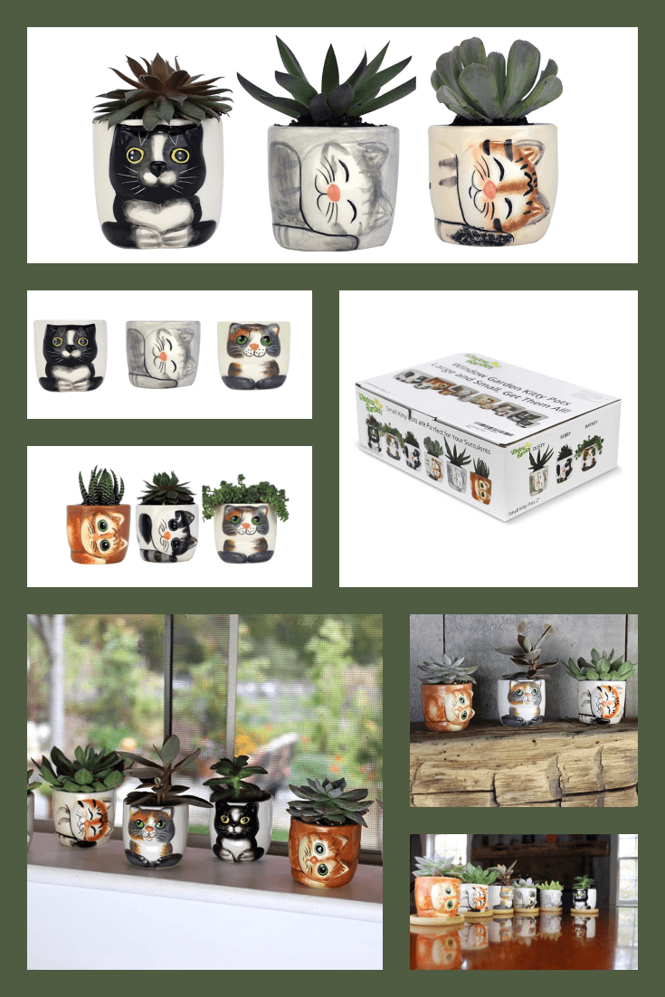 The symbolic flowerpots with a cat pattern are so cute. Diluting the windowsill with them is the best solution for cat lovers.