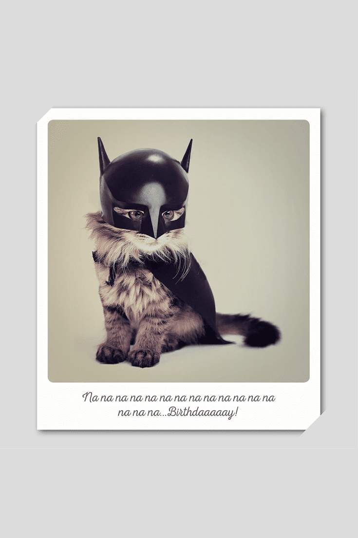 The postcard is always cute and individual. Cat lovers will be pleased to receive a postcard with a picture of a kitten in a Batman costume.