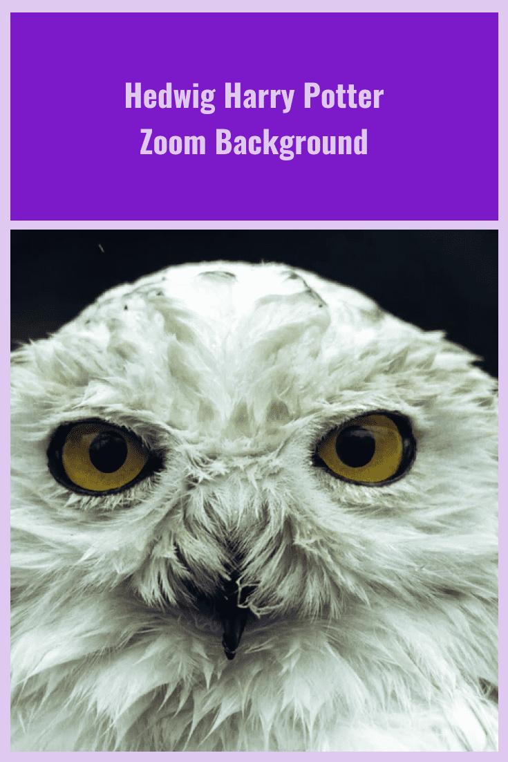 Harry Potter's white owl.