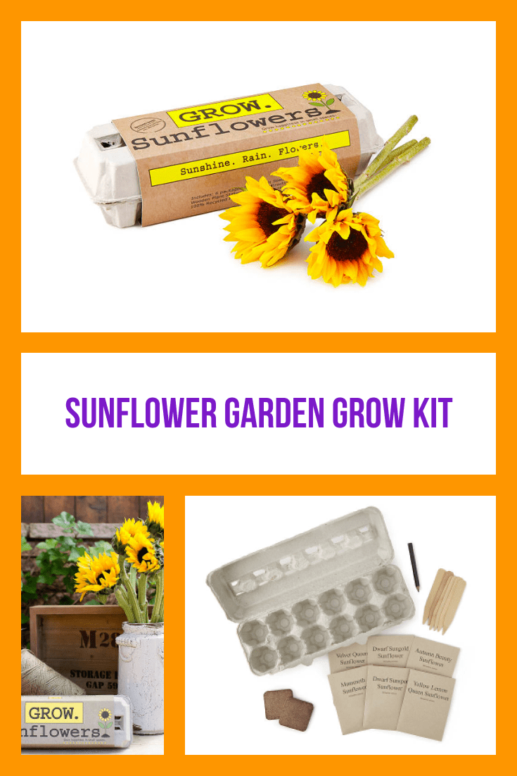 An original gift - eggs for growing homemade sunflowers.