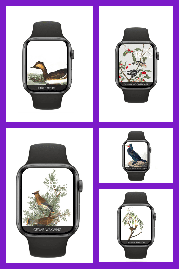 This watch face background was created for all bird lovers.