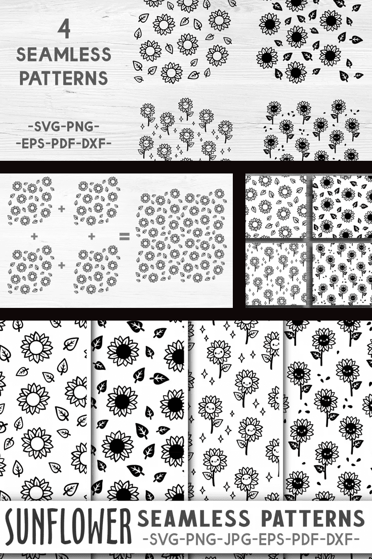 Black and white small sunflowers.