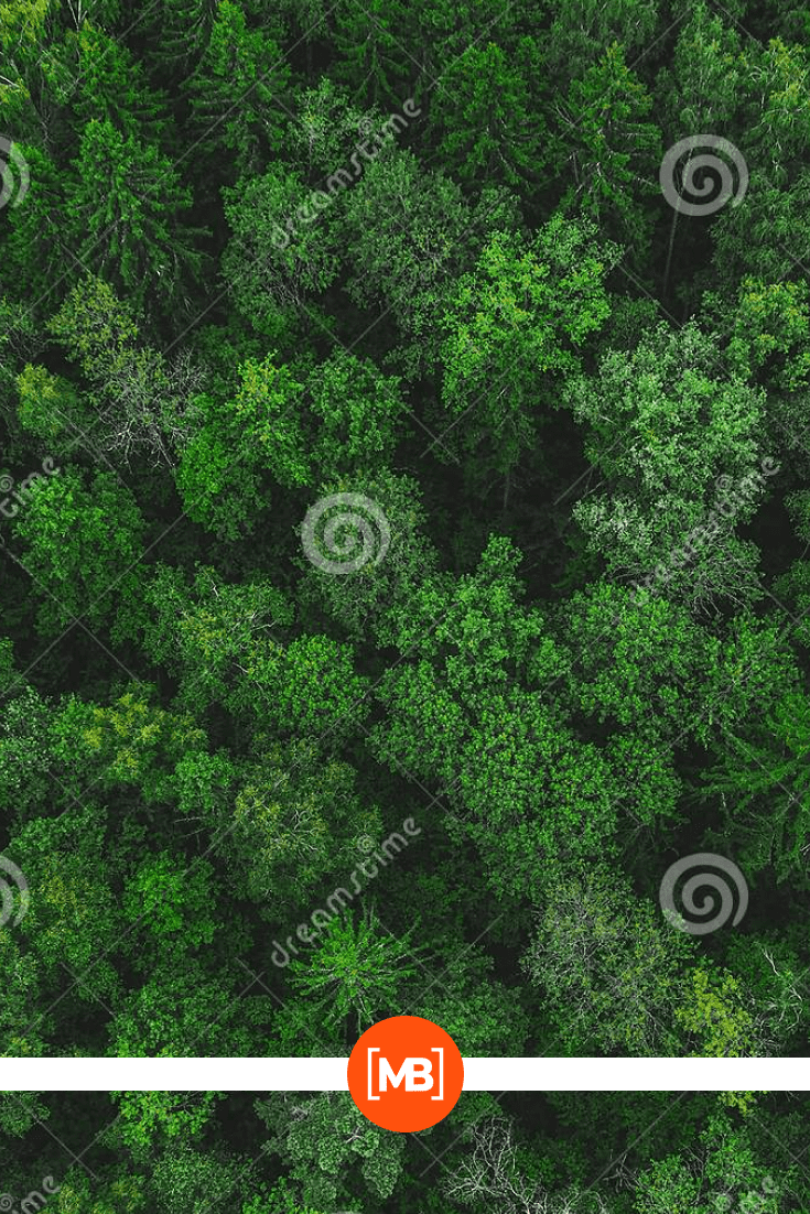 The forest has never been this green. As if the rain had just arrived and there was still dew on the branches.