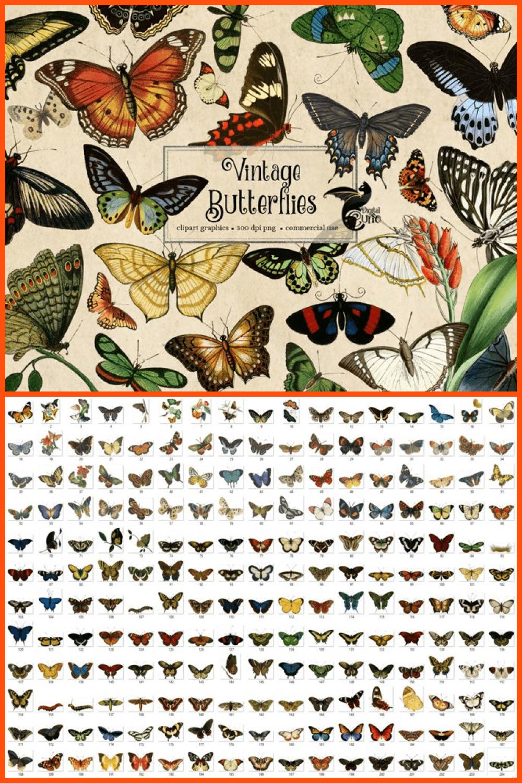 Colorful vintage butterflies.