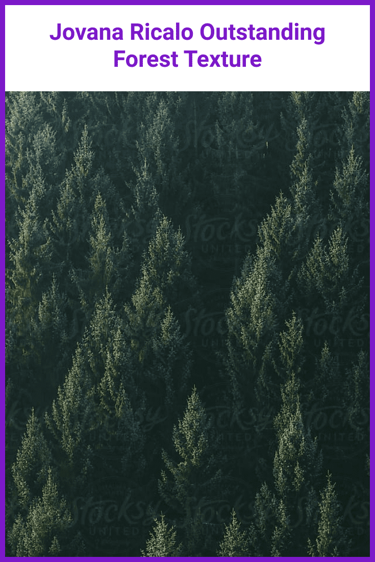 Dark green forest overlooking the pine tops.