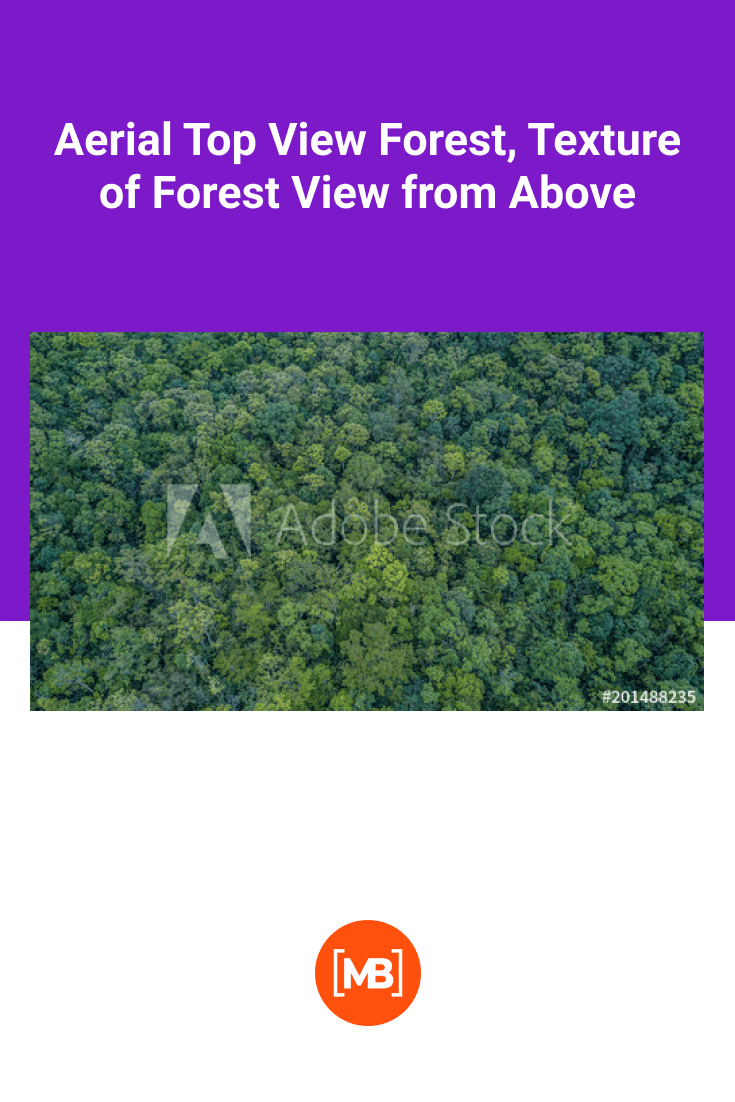 Top view of a very dense green summer forest.