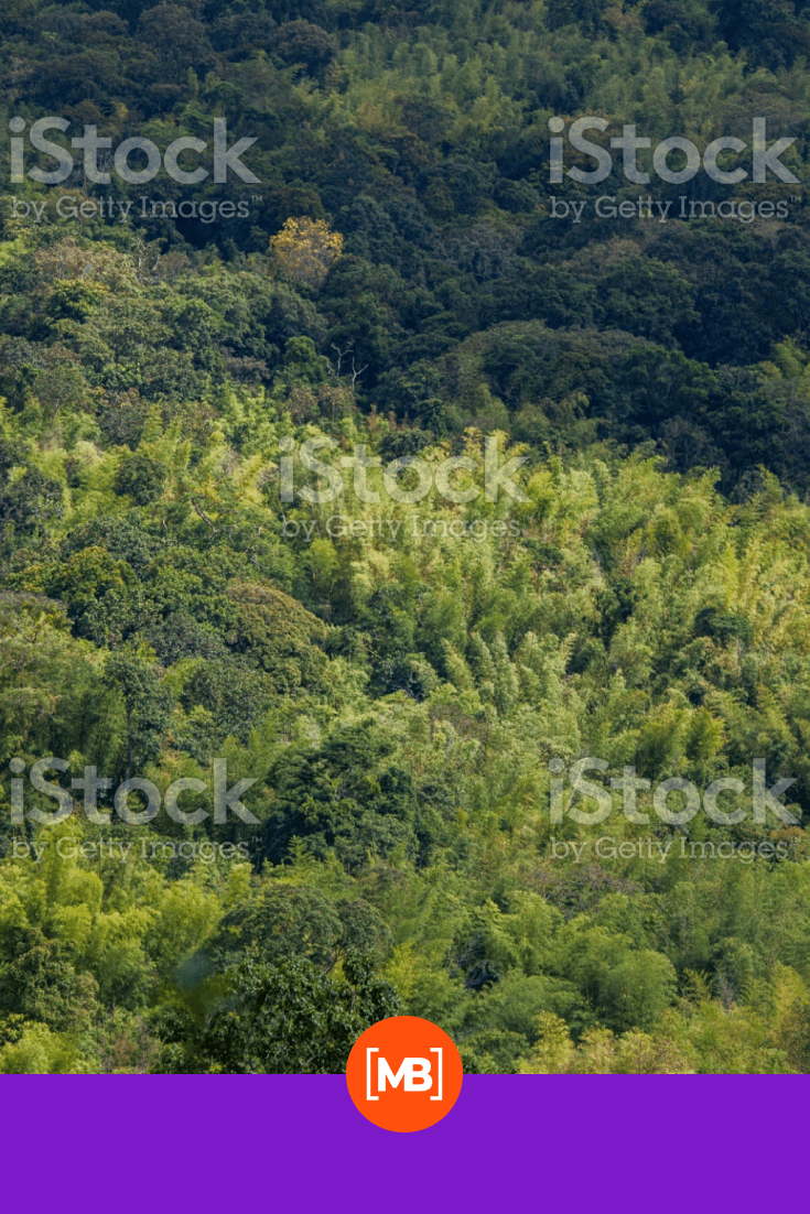 Mixed forest of green and light green colors.