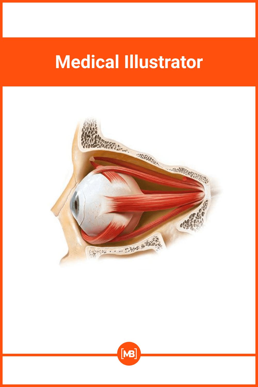 Specific medical illustration on eye.