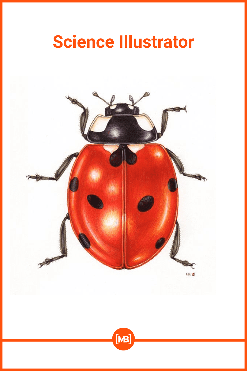 Ladybug in hers classic form.