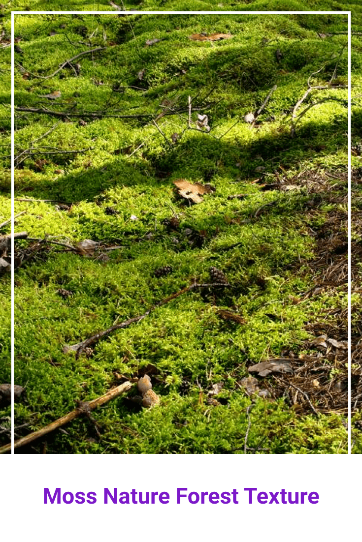 Light green forest moss.