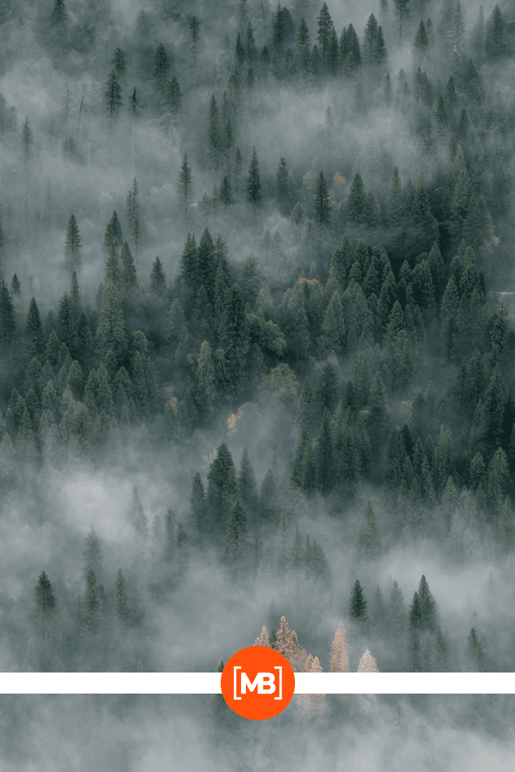 The tops of the trees in the fog.