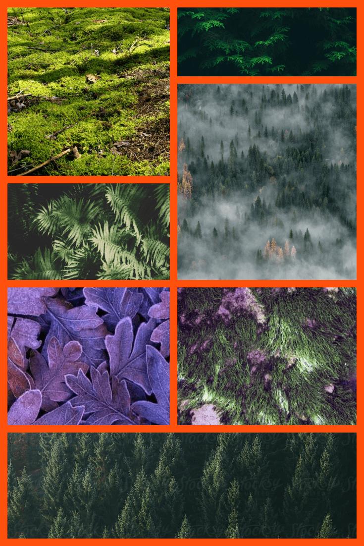 Forest texture Pinterest.
