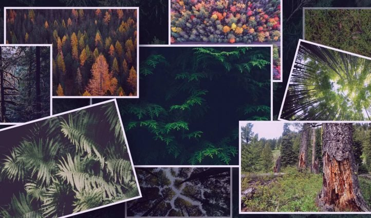 Best Forest Texture Example.