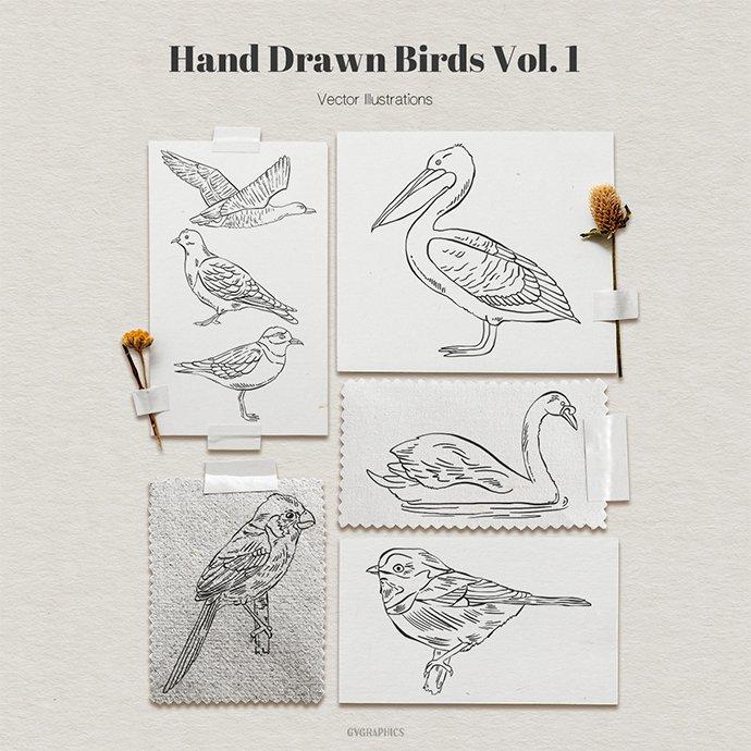 Hand Drawn Birds Vector Illustrations Vol.1 main cover.