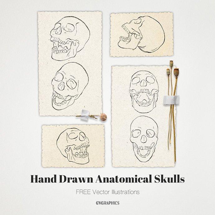 Anatomical Skulls: Hand Drawn Vector Illustrations Main Image.