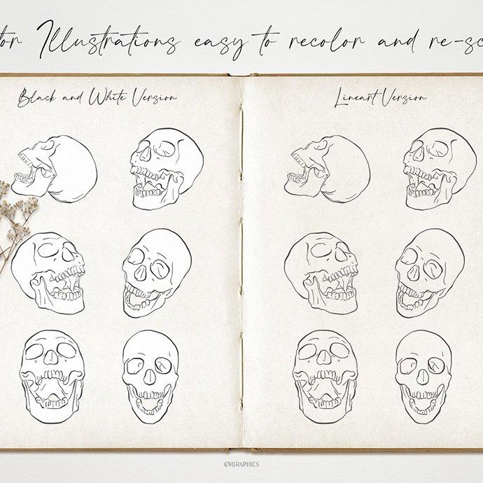 Anatomical Skulls: Hand Drawn Vector Illustrations cover image.