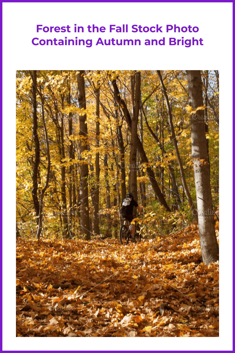 Forest in the fall stock photo containing autumn and bright.
